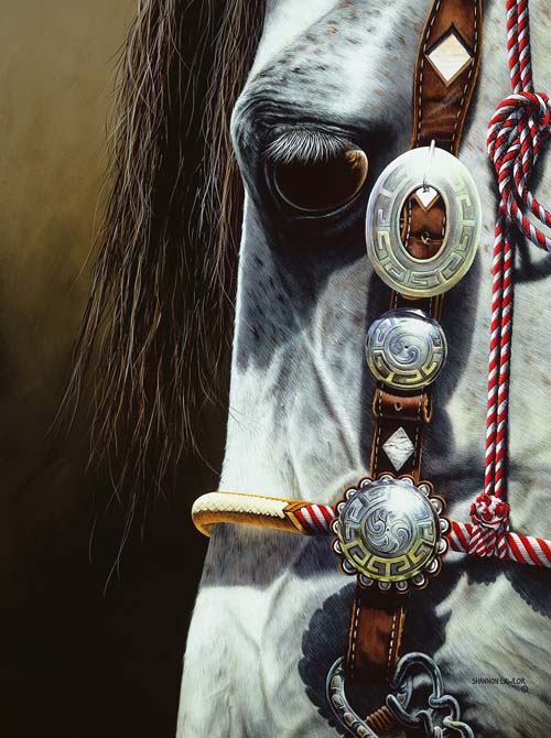 Equine Art by Shannon Lawlor - Commissioned Horse Portraits