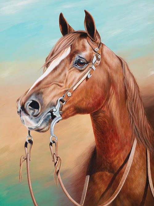 Equine Art By Shannon Lawlor Commissioned Horse Portraits