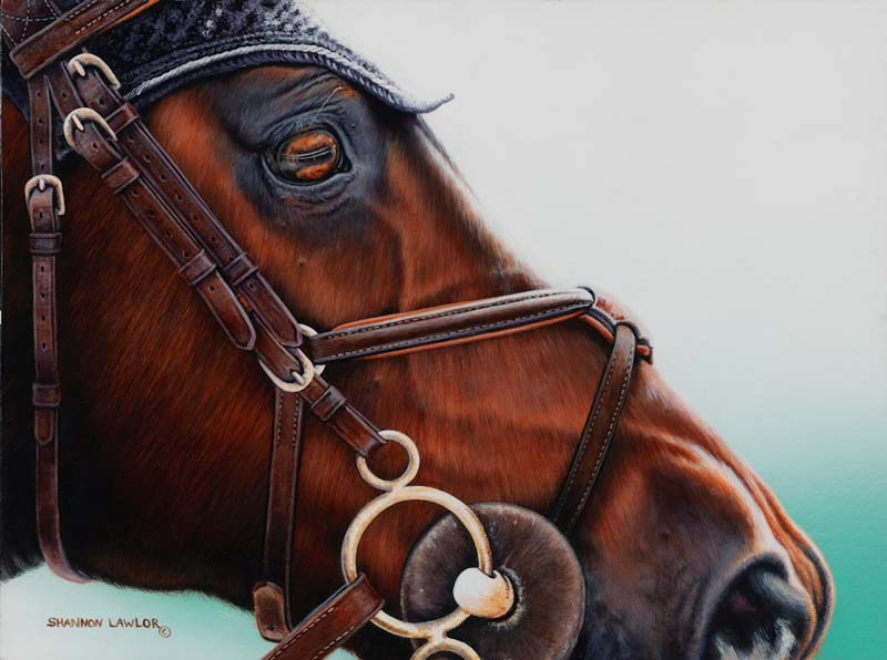 hunter jumper equestrian art print by Calgary Artist Shannon Lawlor