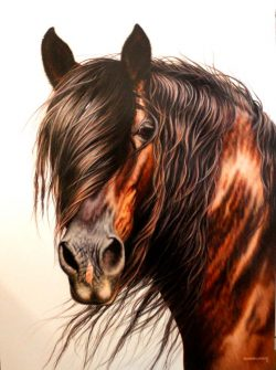 Powerful horse art original painting by Calgary artist Shannon Lawlor