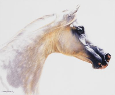 Grey Polish Arabian stallion art original painting by Calgary Artist Shannon Lawlor