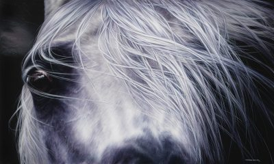 Grey Polish Arabian Mare art original painting by Calgary Artist Shannon Lawlor