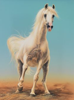Spirited Grey Arabian Stallion art original painting by Calgary artist Shannon Lawlor