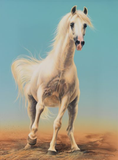 Spirited Grey Arabian Stallion art original painting by Calgary artist Shannon Lawlor
