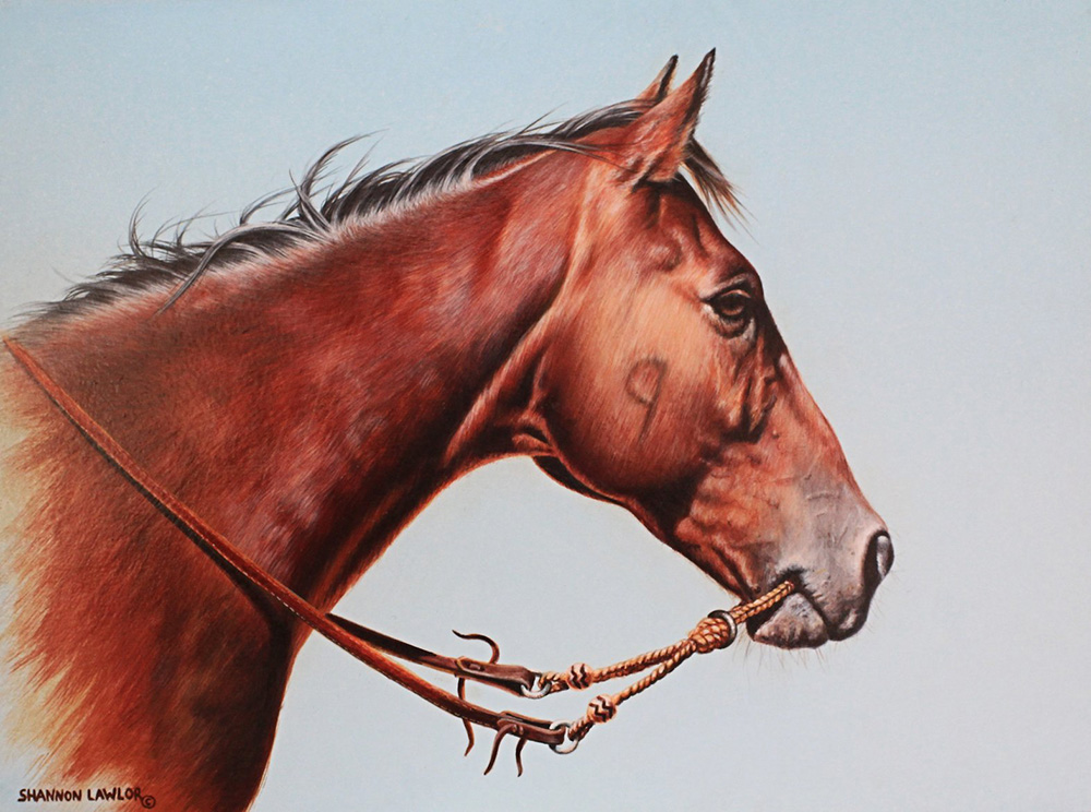 Bay working ranch horse in war bridle art original painting by Calgary Artist Shannon Lawlor