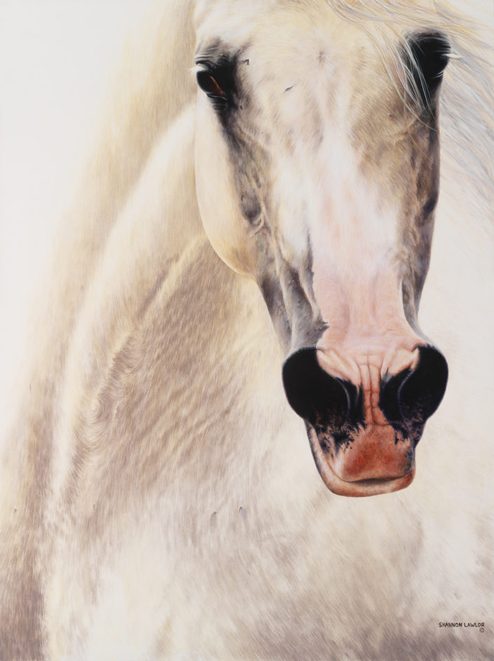 contemporary horse equestrian art print by Calgary Artist Shannon Lawlor