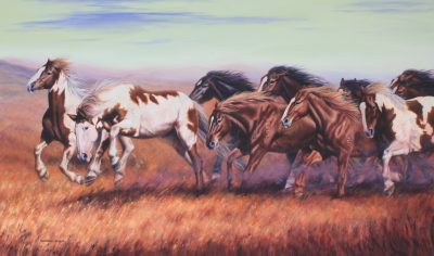 Herd of horses galloping at the Calgary Stampede Ranch art original by Calgary Artist Shannon Lawlor