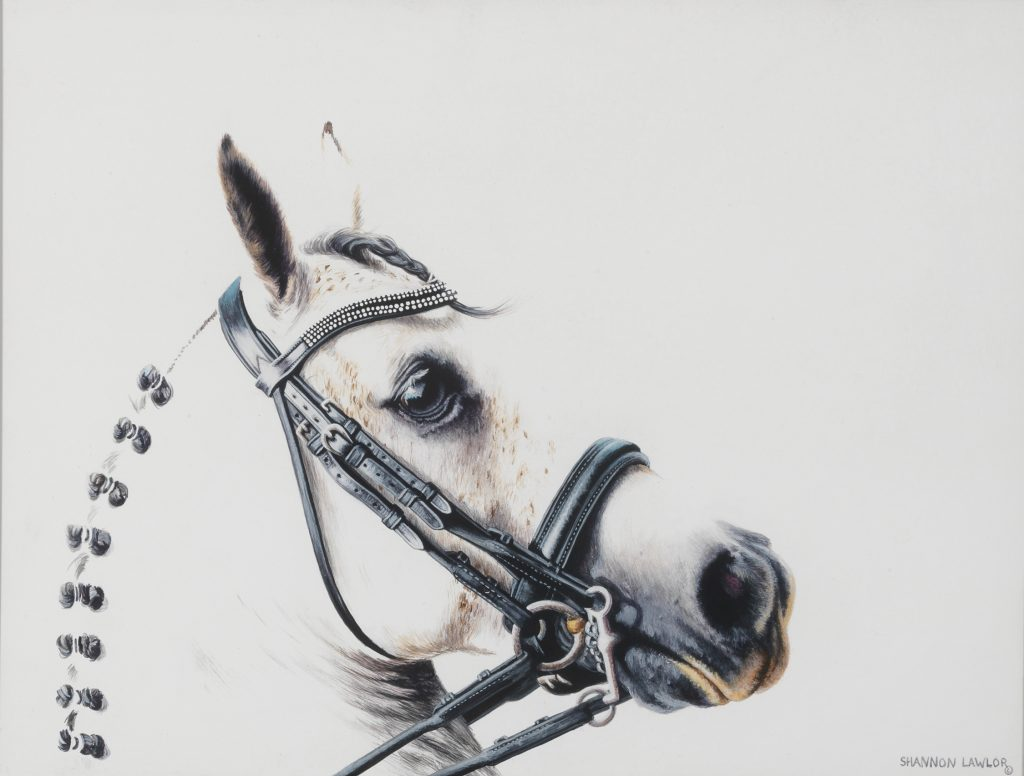White dressage equine art original painting by Calgary Artist Shannon Lawlor