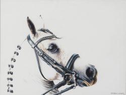 White dressage equine art original painting by Calgary Artist Shannon Lawlor