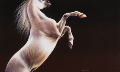 Grey Arabian horse art original painting by Calgary artist Shannon Lawlor