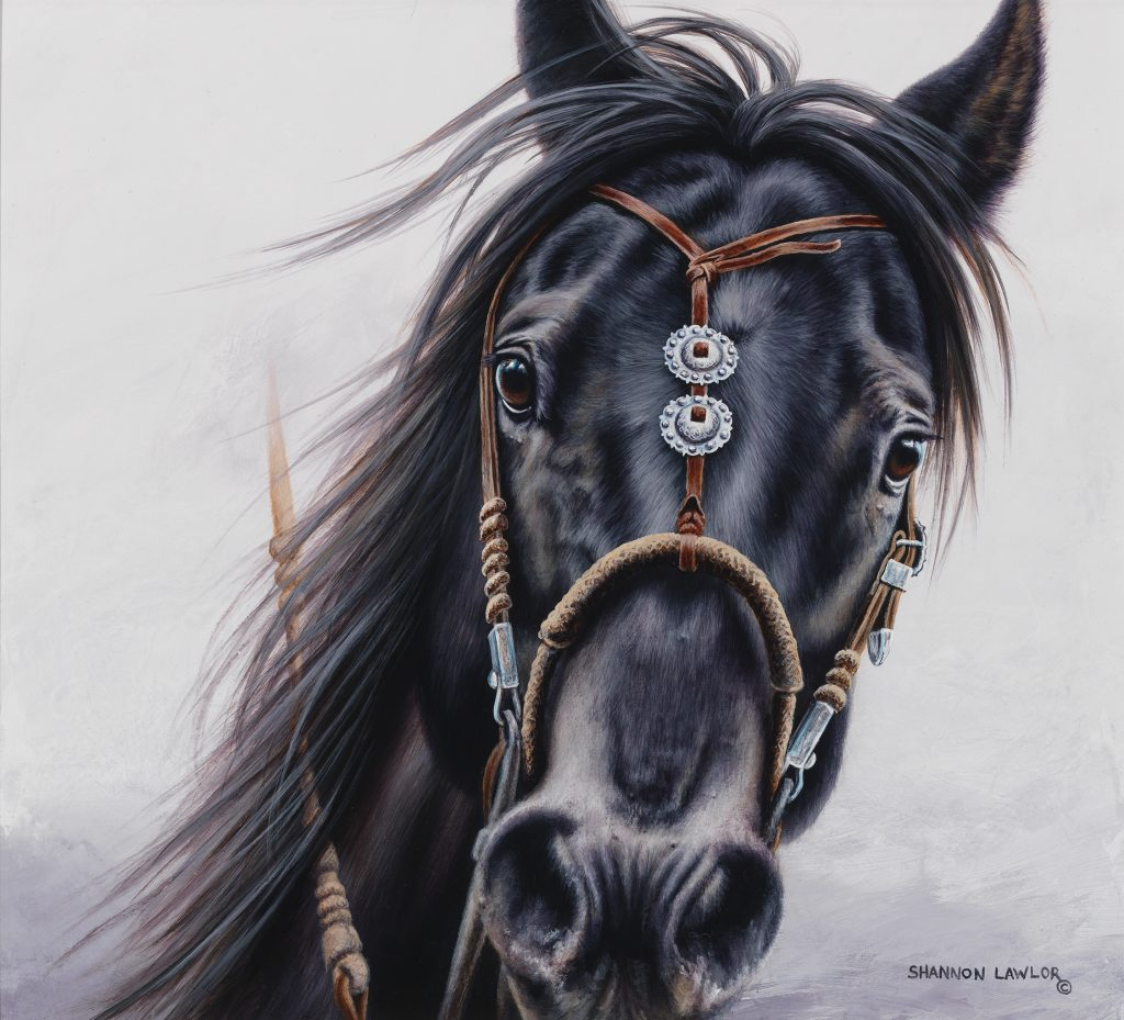 Black vaquero working ranch horse equestrian art original painting by Calgary Artist Shannon Lawlor