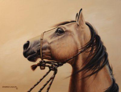 Buckskin bridle horse art original painting by Calgary artist Shannon Lawlor