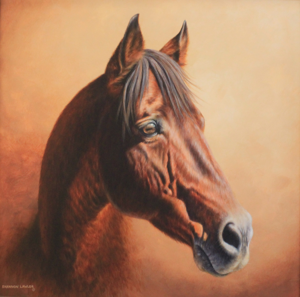 Cape Canaveral Senior Thoroughbred Commission Acrylic Painting by Calgary Artist Shannon Lawlor