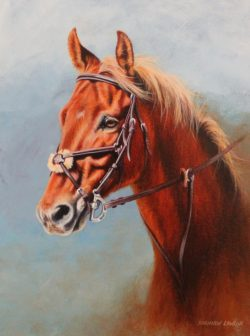 Quinn Commission of Thoroughbred Sport Horse by Calgary Equine Artist Shannon Lawlor