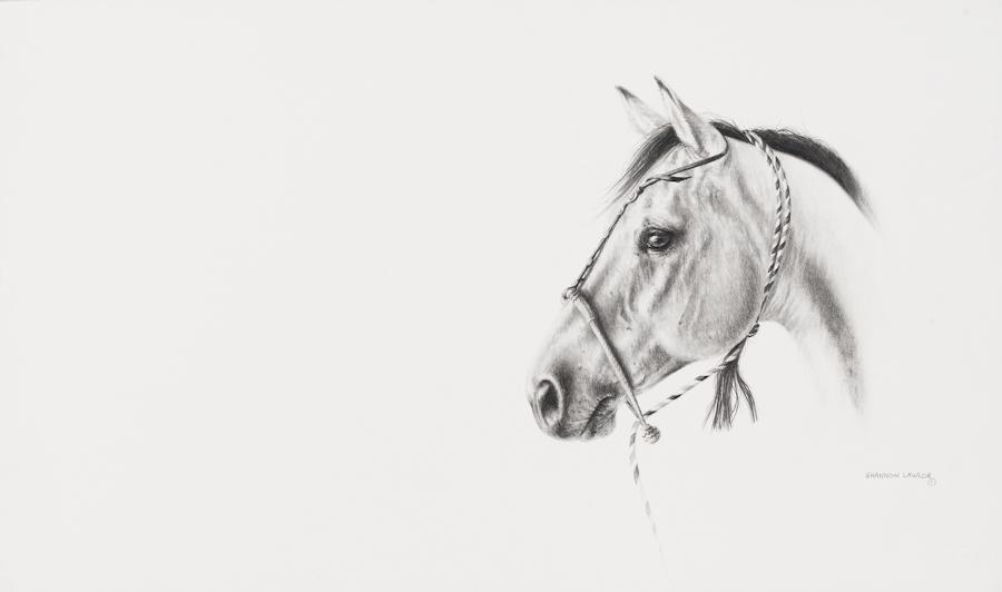 Sadie - hackamore horse - contemporary print by Calgary Equine Artist Shannon Lawlor